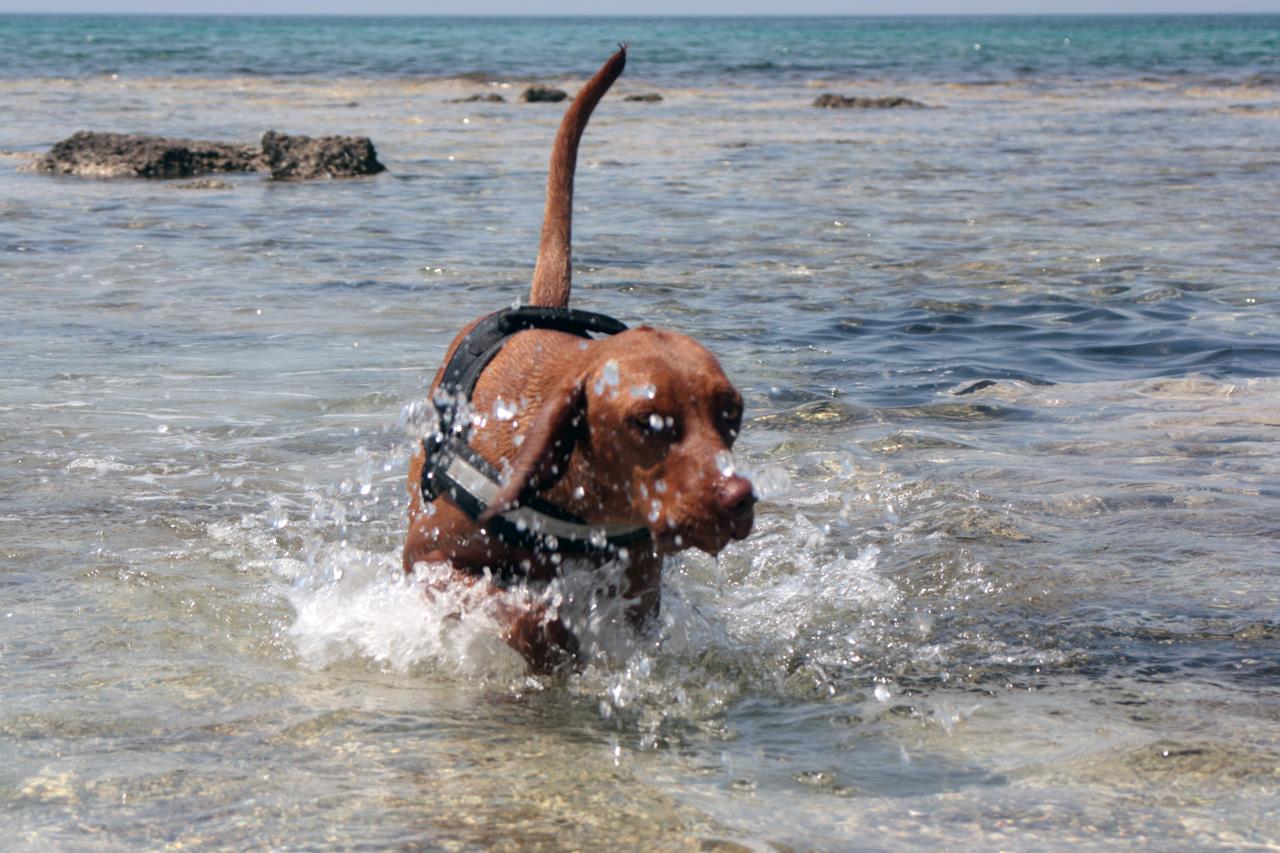 I cani e il mare tutti in acqua 6 zampe educazione cinofila - Come fare il bagno al cane ...
