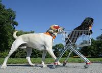 carrello-cane