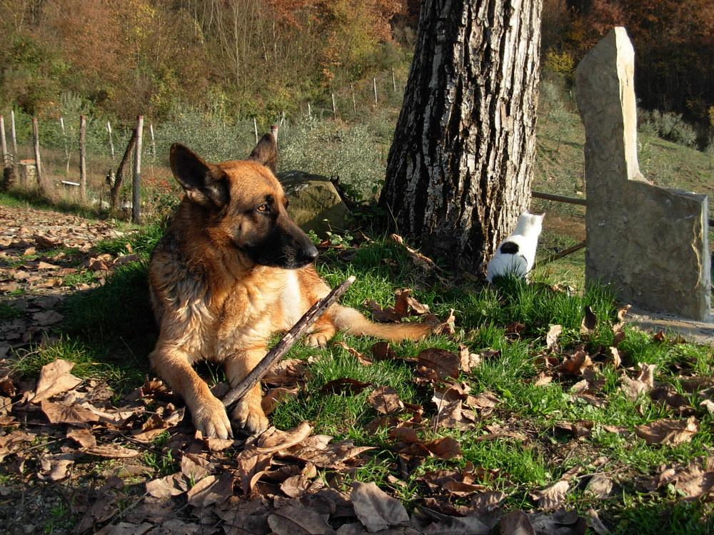 cane-e-micio-nel-giardino-f3e72d38-ebe2-4f3b-b7fc-5b267bc9e3c2