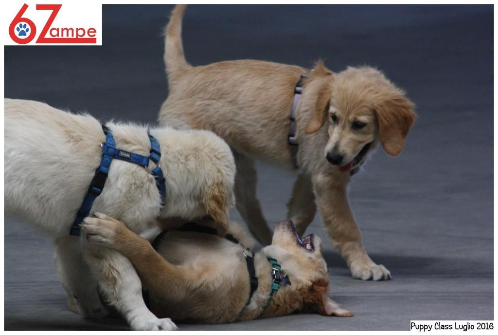 Puppy Class a Capriolo - Corso educazione per Cuccioli - @ 6 Zampe Centro Cinofilo | Capriolo | Lombardia | Italia