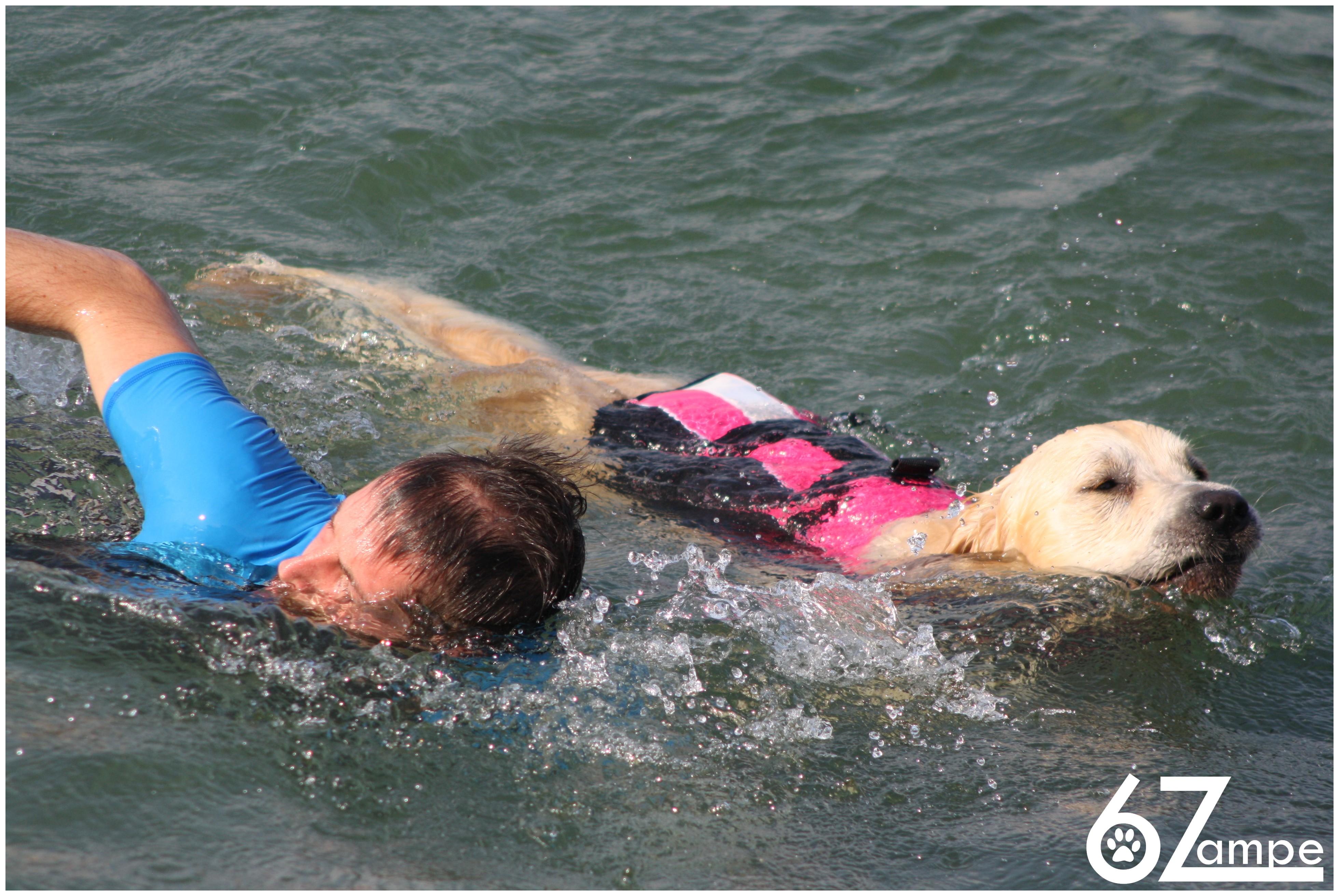 Corso Approccio all'Acqua per Cani Adolescenti e Adulti @ Vicino al lido La Spiaggetta | Iseo | Lombardia | Italia