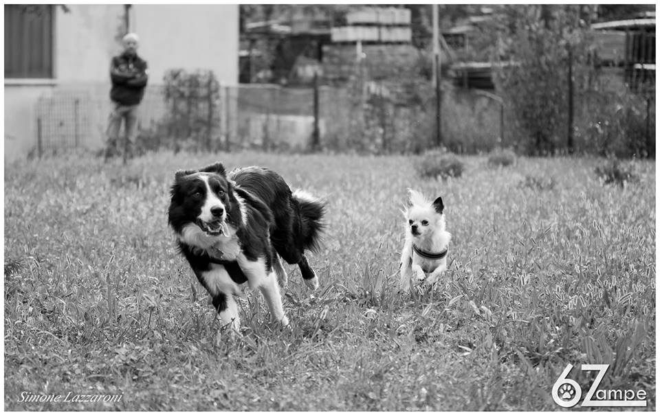 Junior Class - corso di educazione per cuccioloni dai 7 ai 24 mesi @ 6 Zampe Centro Cinofilo | Capriolo | Lombardia | Italia