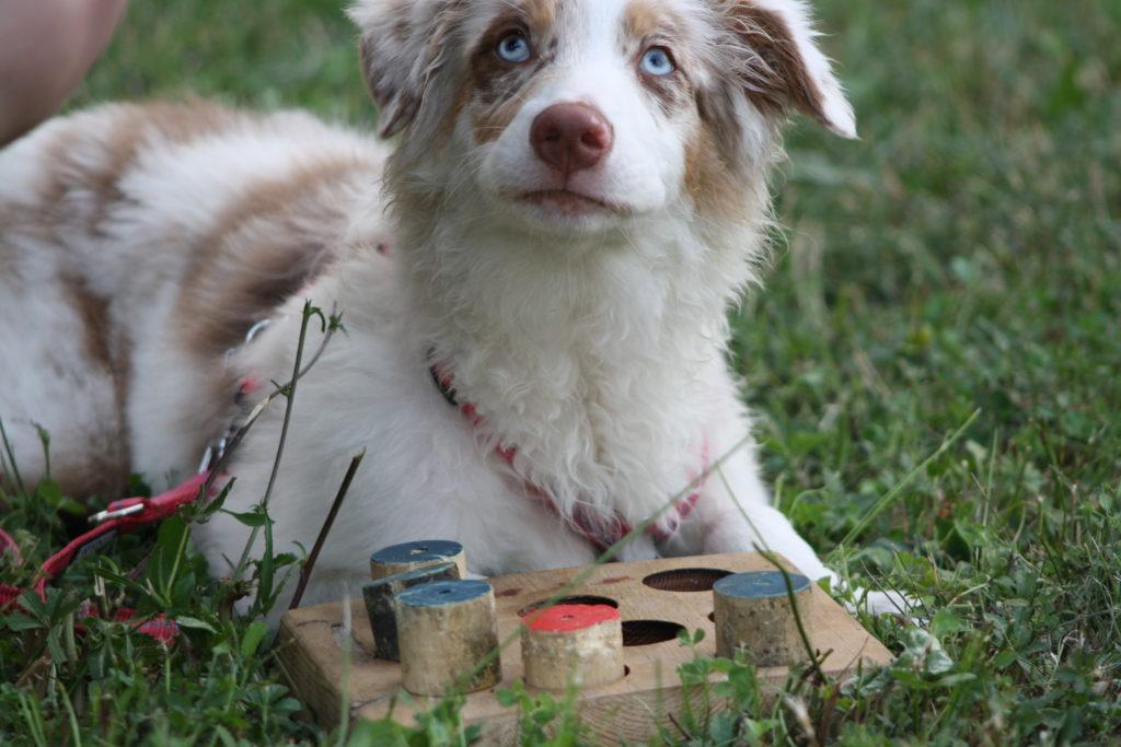 Puppy Class & Junior Class a Palazzolo Sull'Oglio - Corso educazione per Cuccioli - @ Struttura Zoofila Allinea-Menti e Campo 6 Zampe | Capriolo | Lombardia | Italia