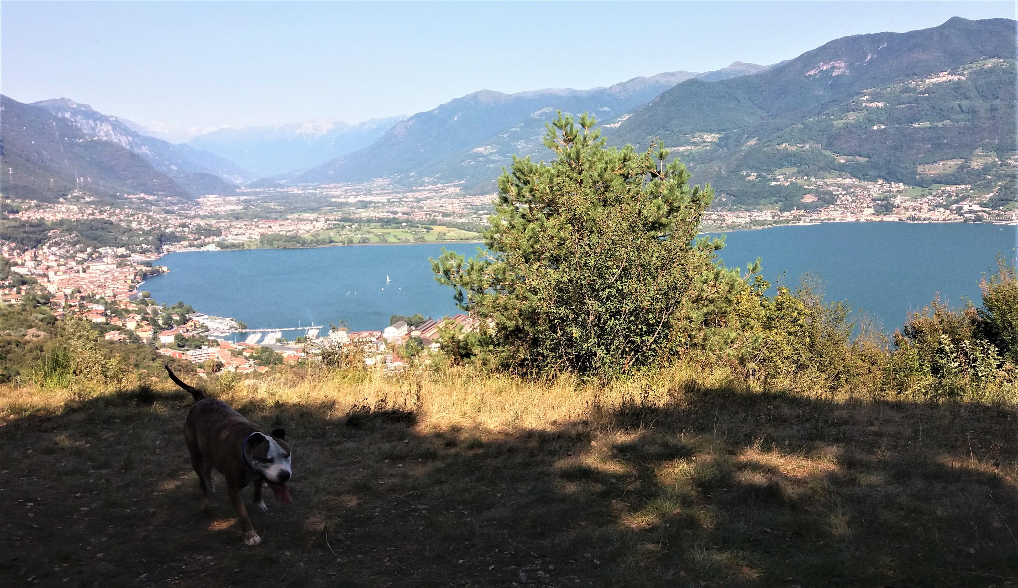 Trekking Via degli Apostoli - Solto Collina @ 6Z Centro Cinofilo | Paratico | Lombardia | Italia