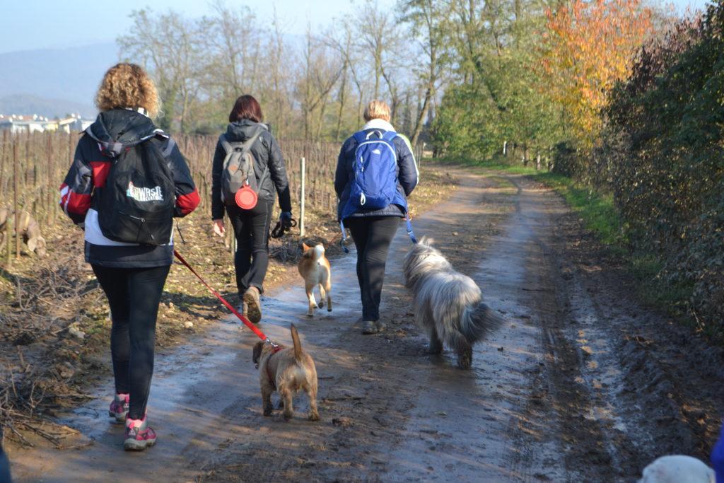 6 Zampe On The Road -Edizione Sabato- Camminando si impara... @ Palazzolo s/o | Capriolo | Lombardia | Italia