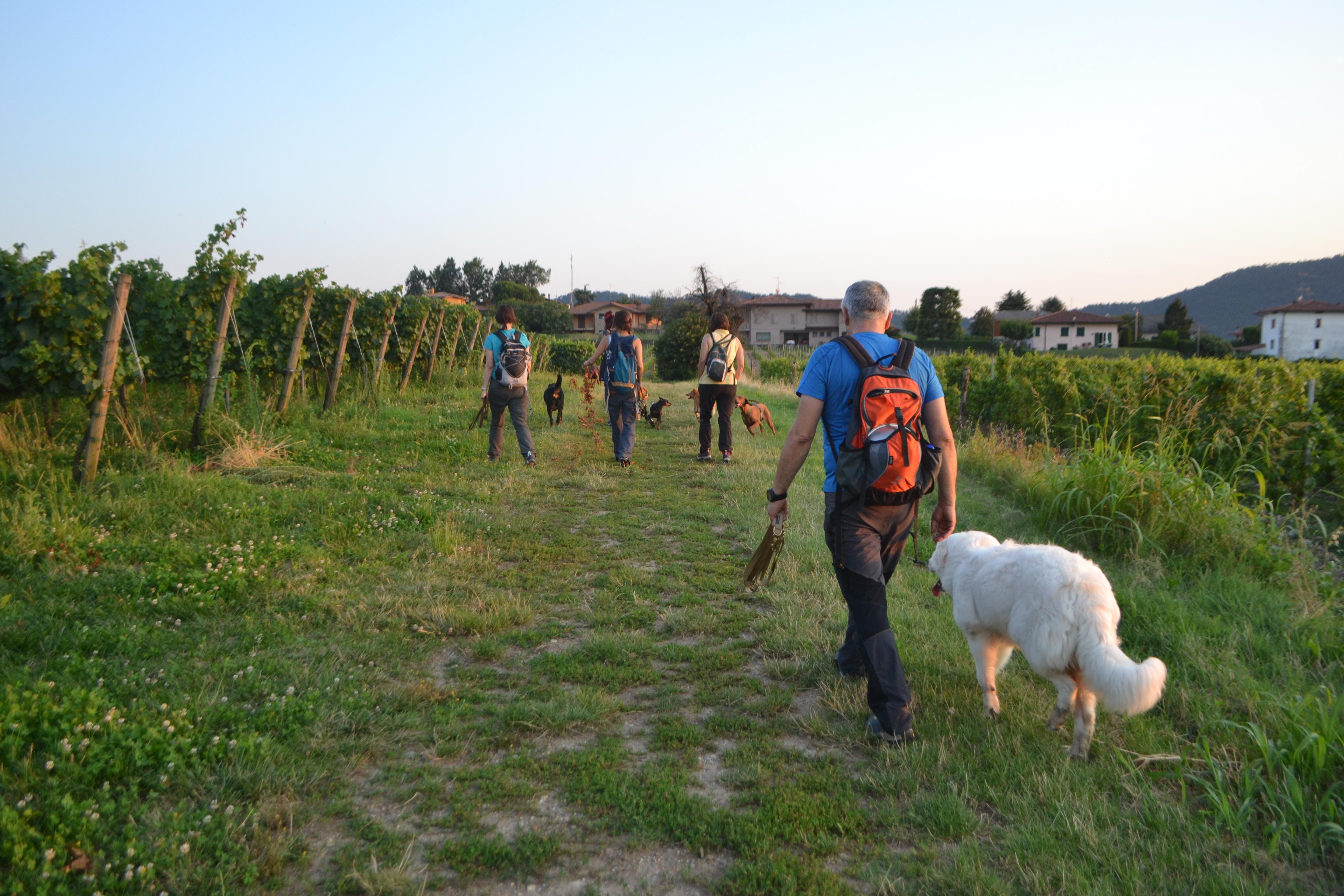 6 Zampe On The Road -Edizione Giovedì sera- Camminando si impara... @ Palazzolo s/o | Capriolo | Lombardia | Italia